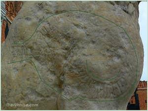 Inscriptions runiques sur l'épaule gauche du lion de l'Arsenal de Venise
